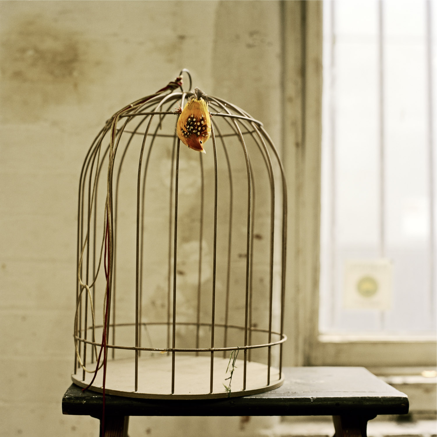 Birdcage, 2010, from the series Touchstones by Abby Storey.